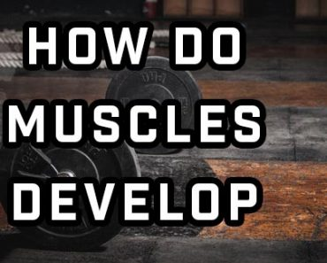 How Do Muscles Develop